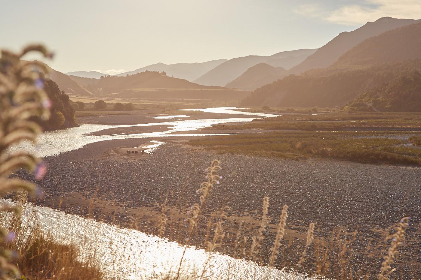 Neuseeland's Südinsel erstaunt immer wieder mit wunderschönen Landschaften! Langsam geht die Sonne unter, als wir in dieses Tal und Flussbett schauen und sich die Blumen sanft im Wind wiegen.