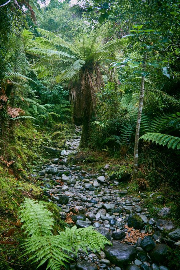 Copland Track, Palme, Umgebung, Scenery, regnerisch, Regen, Neuseeland, Westküste, Urwald