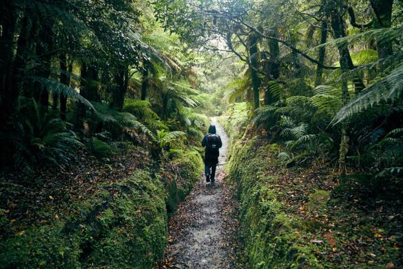 Copland Track, to, Welcome Flat Hut, Wanderung, Wanderweg, Regen, Regenwanderung, nasses Klimam, Neuseeland, Südinsel, New Zealand, South Island, wetterfeste Kleidung, Ronnie