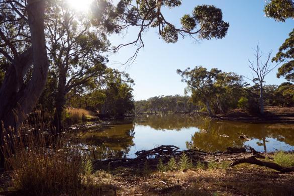 Duck Lake, Kangaroo Island, Weg, spazieren, viele Voegel, Kakadus, Landschaft, Landscape, Roadtrip, fun