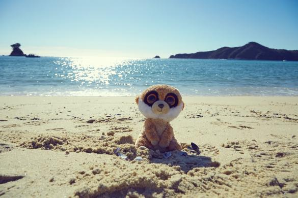 Ed is back, Ed das Erdmännchen, Meerkat, Reisemaskottchen, Travelblog, Miles and Shores, Abel Tasman Nationalpark