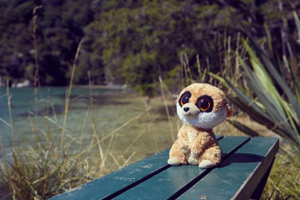 Ed, Erdmännchen, Reisemaskottchen, Coastal Track, Abel Tasman Nationalpark
