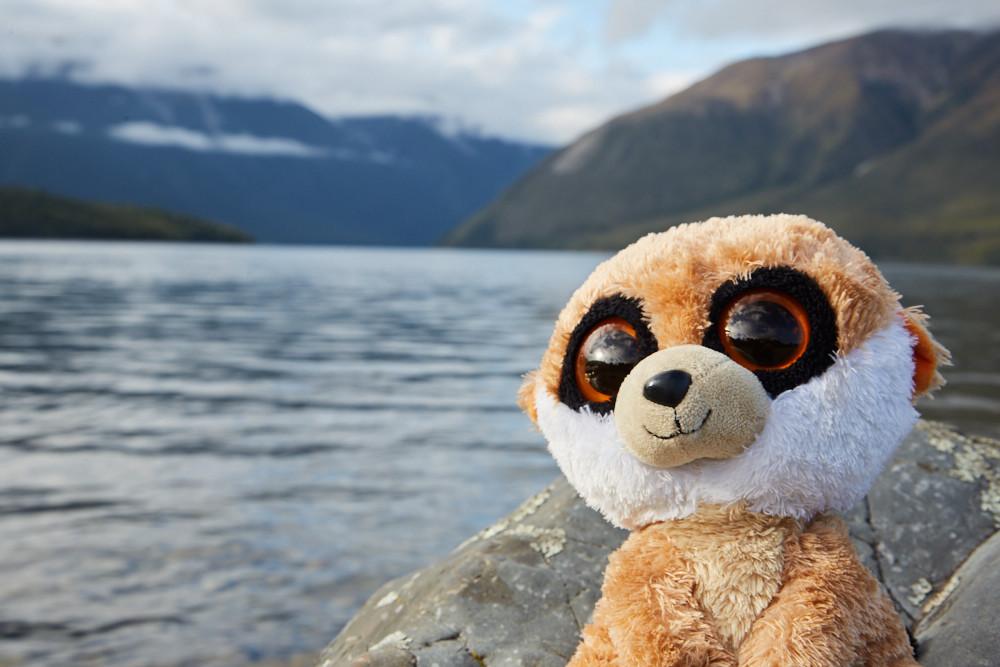 Ed das Erdmännchen, Reisemaskottchen, Ed is back, Lake Rotoiti, Reisemaskottchen, Neuseeland, Reiseblog, Miles and Shores