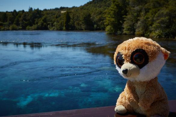 Ed, Ed is Back, Reisemaskottchen, Stofftier, Selfiequeen, Pupu Springs, Neuseeland, New Zealand, Roadtrip, Reisemaskottchen, Travelblog, Reiseblogger