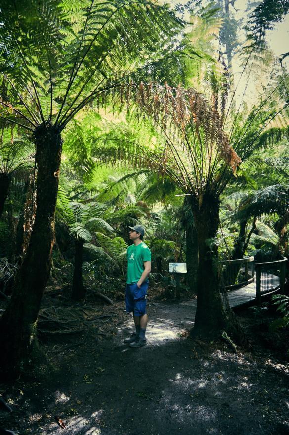 Great Otway, National Park, NP, Australien, Australia, Victoria, Regenwald, Urwald, Rundweg, Maits Rest, Forest Walk, kurzer Weg, Spaziergang