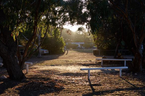 Ki Western, Caravan Park, Kangaroo Island, Campsite, Campingplatz, best one, so far, so viele Tiere, animals, Koalas, Kangaroos, Wallabys