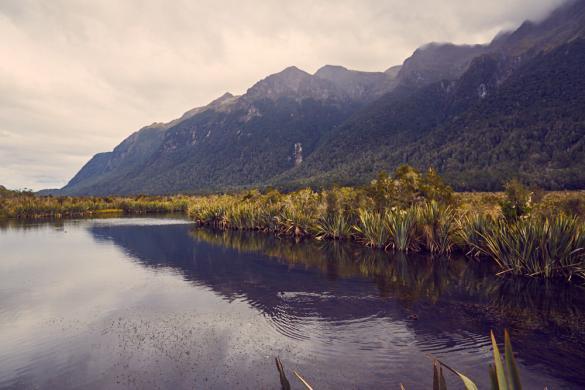 Mirror Lakes, Fjordland Nationalpark, Neuseeland, New Zealand, Südinsel, Landscape, Landschaft, See, klein, spiegelnd, Wasseroberfläche