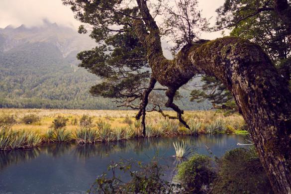 Mirror Lakes, Seen, spiegeln, Wasseroberfläche, Neuseeland, New Zealand, Landschaft, Landscape, Baum, beeindruckend, massiv