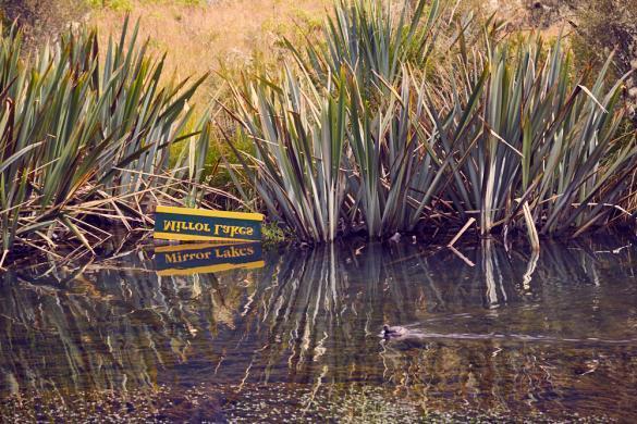 Mirror Lakes, Spiegel, See, Wasseroberfläche, Schild, 10 min, Walk, Spaziergang, Fjordland Nationalpark