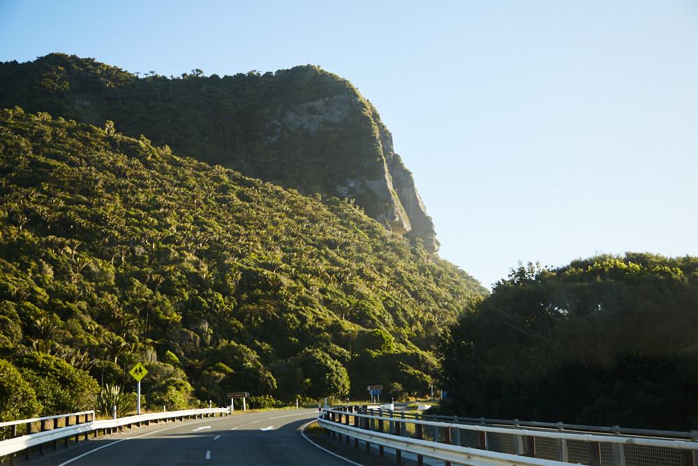 Die Straße Richtung Punakaiki in Neuseeland ist gesäumt von Farnpalmen und dichtem tropischen Wald, der bis an die Straße heran ragt.