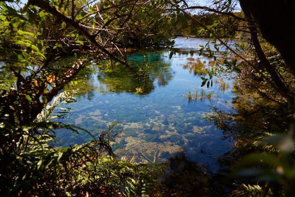 Te Waipupu Springs, Wasser, klar, Farben, kein Polfilter, Sichtweite, heiliges Wasser, Naturschutz, Neuseeland