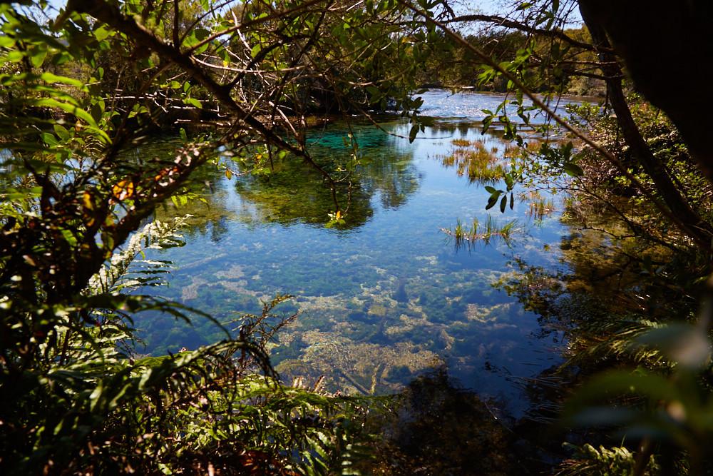 Die Te Waipupu Springs, auch Pupu Springs, verfügen über glasklares Wasser, sodass man immer bis auf den Grund der Seen blicken kann