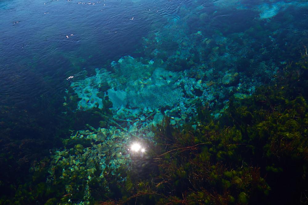 türkise, intensive Farben und eine prächtige Unterwasser Pflanzenwelt kann man bei den Pupu Springs in Neuseeland auch vom Ufer aus betrachten! Ein wahrer Geheimtipp im Norden der Südinsel von Neuseeland