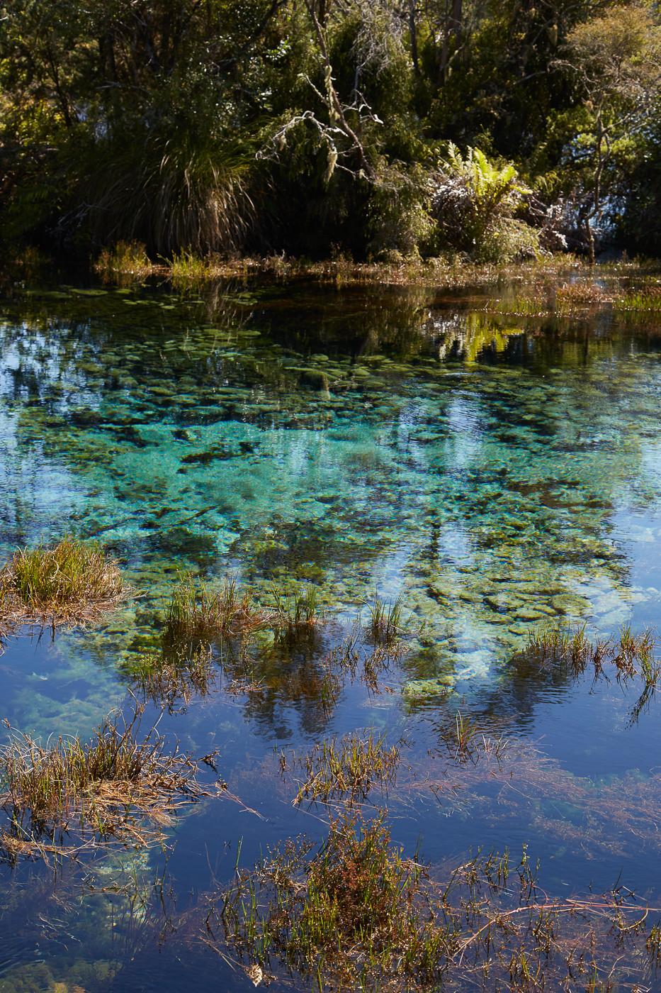 Die Te Waikoropupū Springs auch Pupu Springs in Neuseeland sind ein Ziel etwas abseits der klassischen Touristenpfade auf Neuseelands Südinsel. Die Seen sind berühmt für ihr extrem klares Wasser und die wunderschönn Farben, die sich im See abzeichnen