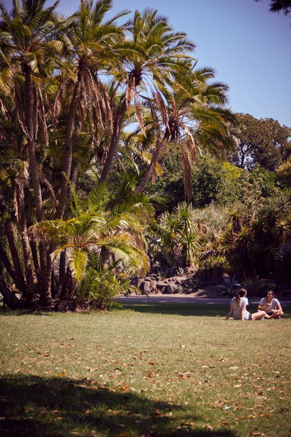 Royal Botanical Gardens, Palmen, Palm Trees, Melbourne, Citytrip, Städtetrip, Städtereise, Australien, Urlaub, Botanischer Garten, gruen, grün, entspannen, Entspannung, pur, gratis, Eintritt frei, Empfehlung, Tipp