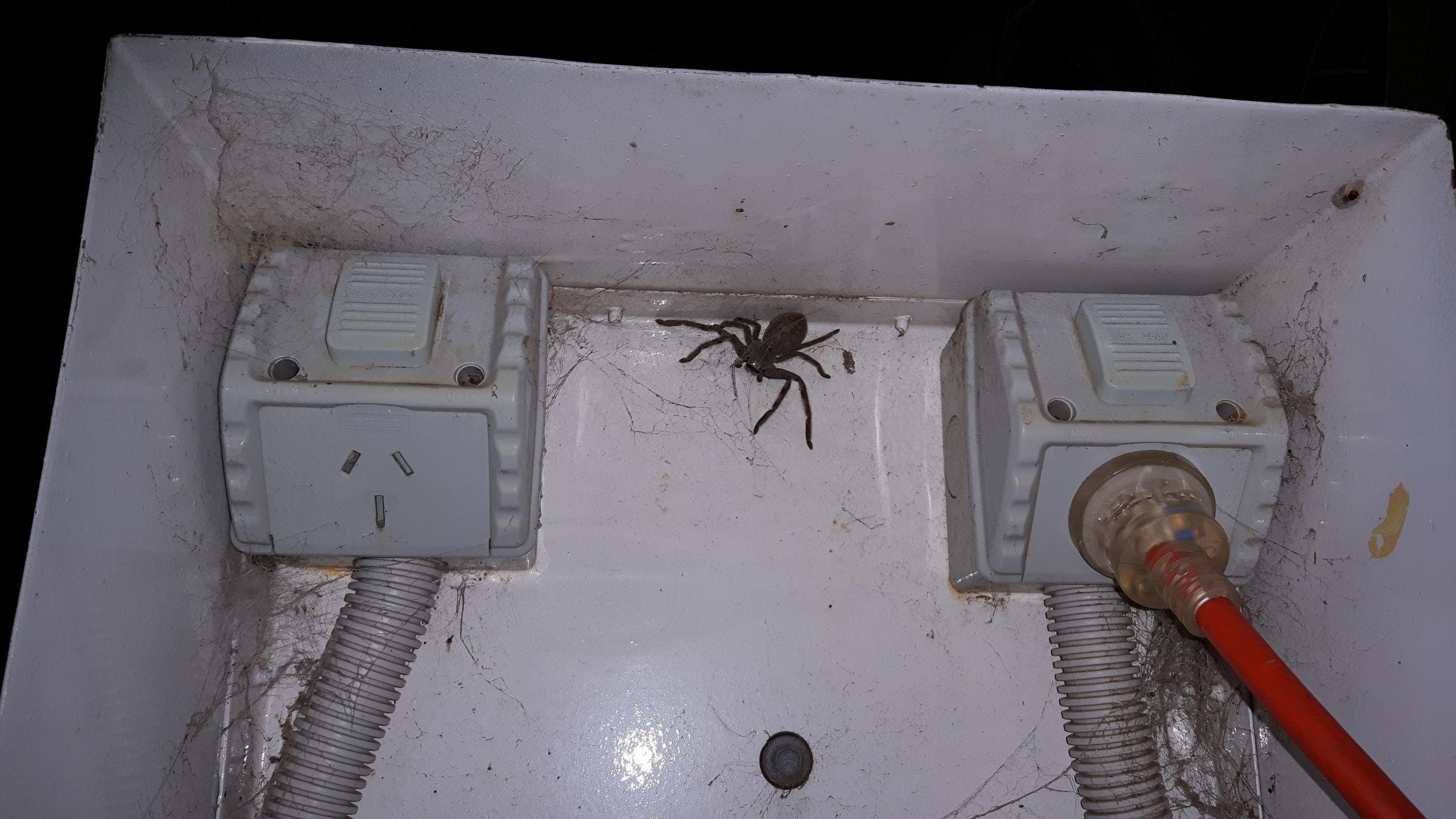 Spinne, spyder, Australien, Cape Jervis, Huntsman, Campingplatz, Campsite