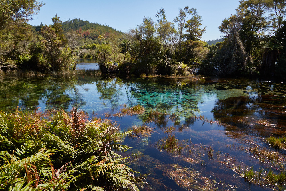 Die Te Waipupu Springs, auch Pupu Springs, im Norden der Südinsel von Neuseeland. Bei einer Rundreise von Neuseeland sollte man diese schöne Lagune auf alle Fälle auch gesehen haben