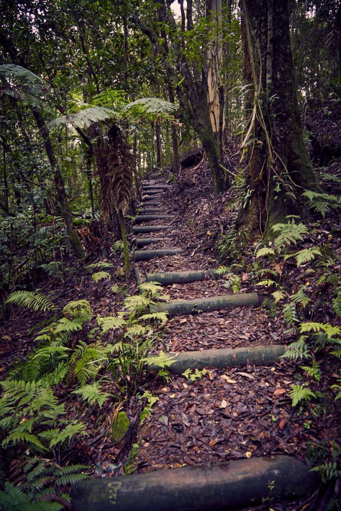 Wandern im Barrington Tops National Park in Australien