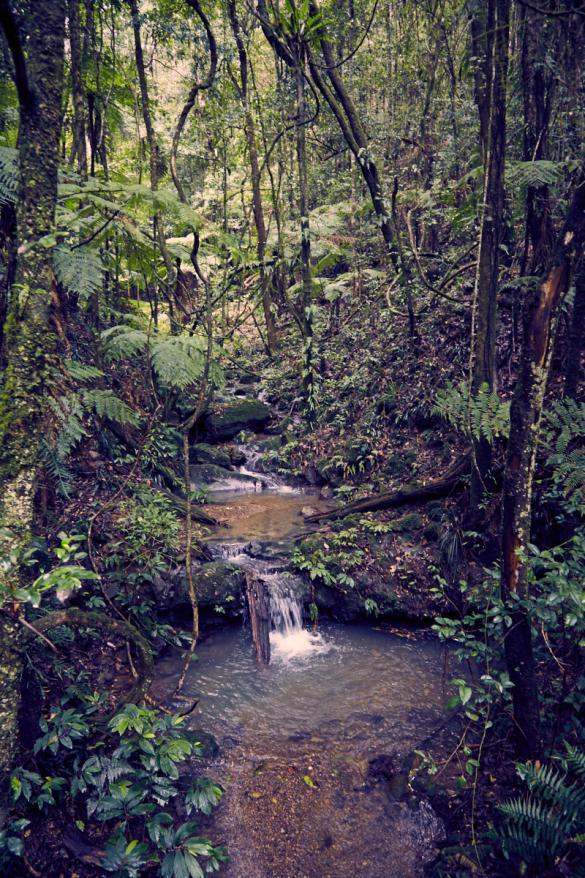 Barrington Tops, National Park, Nationalpark, Wanderung, wandern, Bach, wunderschoen, toll, Wanderweg, Miles and Shore, achtung blutegel