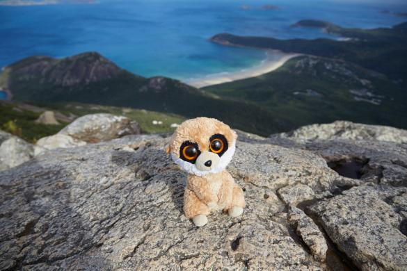 Ed, das Erdmännchen, Mount Oberon, Berg, Mountain, Ausblick, view, wandern, Wanderung
