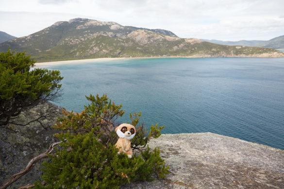 Ausblick, Pillar Point Lookout, Lookout, view, Ed, Maskottchen, Erdmännchen