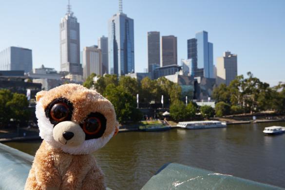 Australien, Australia, roadtrip, Ed, Erdmännchen, Maskottchen, Melbourne, cityscape