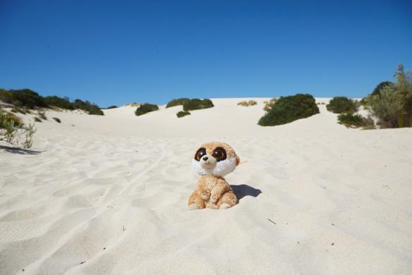 Ed, Little Sahara, Wüste, Kangaroo Island, Australien, Australia, Roadtrip