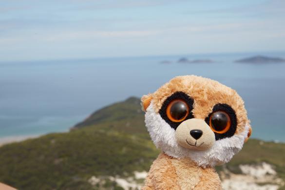 Meer, Ausblick, Ed, das Erdmännchen, Maskottchen, Reise, Urlaub