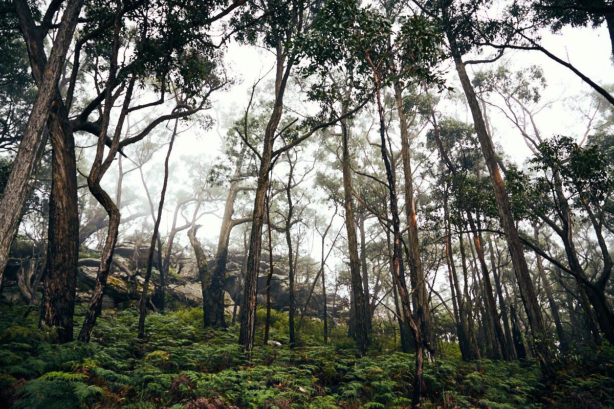 Grampians, Nationalpark, National Park, diesig, dunstig, nebelig