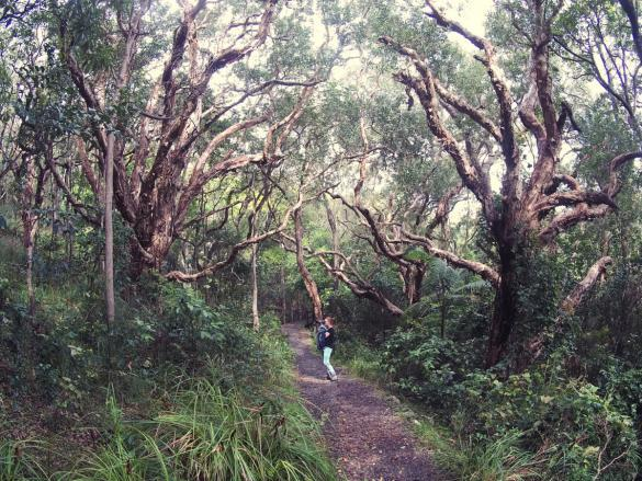 Hat Head, Nationalpark, Wanderung, wandern, Ausflug, Australien, Roadtrip, Chrisi, Miles and Shores, fotografieren, Wald,