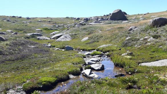 Mount Kosciuzko, Australien, Australia, Wiese, saftig, grün, guren, höchster Berg, highest mountain, Wanderung, wandern