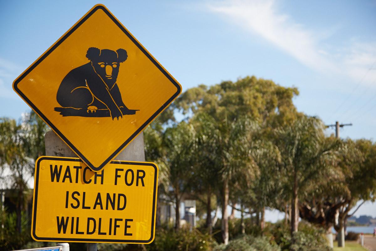 Raymond Island, Kaola, Zeichen, Verkehrsschild, Achtung, beware, Koala Trail, track, wildlife