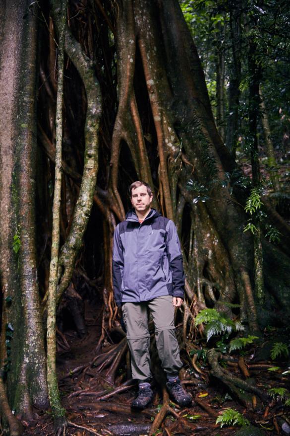 Ronnie, Baum, Regenwald, dicke, Baumstamm, Stamm, Womba Walk, Dorrigo Nationalpark, Australien