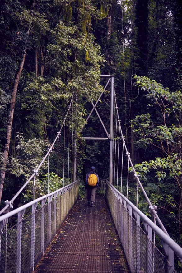 Ronnie, Brücke, Dorrigo Nationalpark, Australien, Roadtrip, wandern, Wanderweg, Swingbridge, Hängebrücke, regnerisch, Regenwald, Urwald