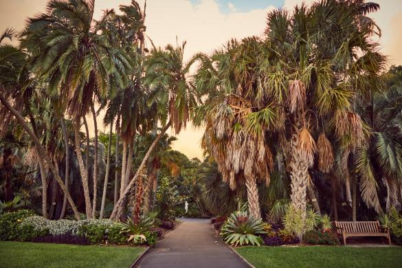 Royal Botanical Gardens, Sydney, Palmen, palmtrees