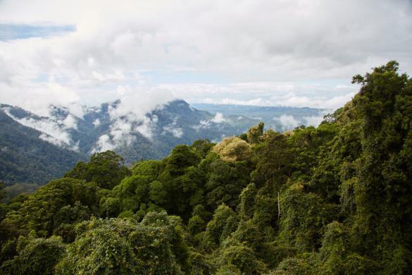 Skywalk, Aussicht, Dorrigo National Park, Australia, Australien, Nationalpark, Regenwald, bewölkt