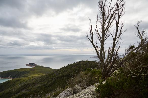Tongue Point, Wilsons, Promontory, Natinalpark, National Park, Australien, Roadtrip, Ausblick, view, viewpoint, landscape, Landschaft, Wanderung, Wanderweg,