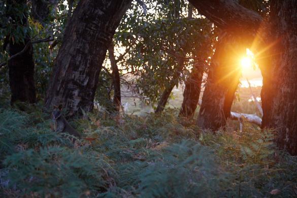 Sonnenuntergang, Wallaby, Sonne, Wilsons Promontory, National Park, Vereker Outlook Track