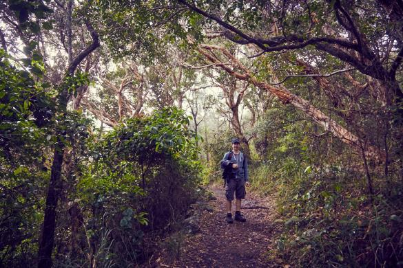 Ronnie, Wanderung, wandern, Hat Head, Ausflug, Nationalpark, Wald, Weg, Miles and Shores, Reisebericht