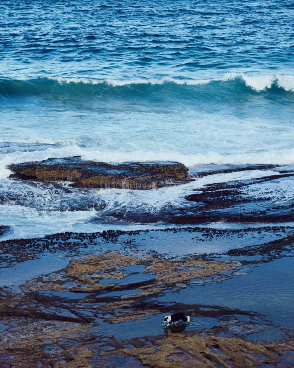 Wasser, Meer, Hund, dog, Küste