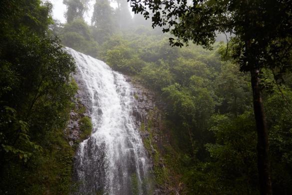 Dorrigo National Park, Australia, Australien, falls, Wasserfall, Attraktion, must see, wunderschoen, regnerisch, Womba Walk, Regenwald