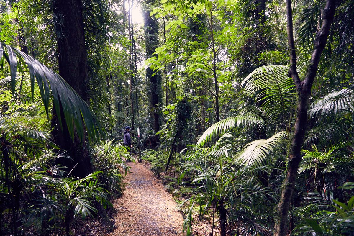 Dorrigo National Park, Australia, Australien, Roadtrip, Womba Walk, Regenwald, Ronnie, Weg, Wanderweg, zwei Stunden, Wald, Waldweg, wandern