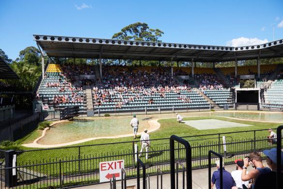 Crocosseum, Australia Zoo, tiershow, animalshow, crocodile, Krokodil, Tierpfleger, Queensland, zoo