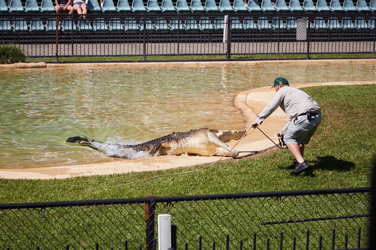 Crocosseum, animal show, Queensland, Ausstralia Zoo, death roll, Todesrolle, watch, Tiershow, miles and shores, ist es das wert? australia zoo: ja, nein?
