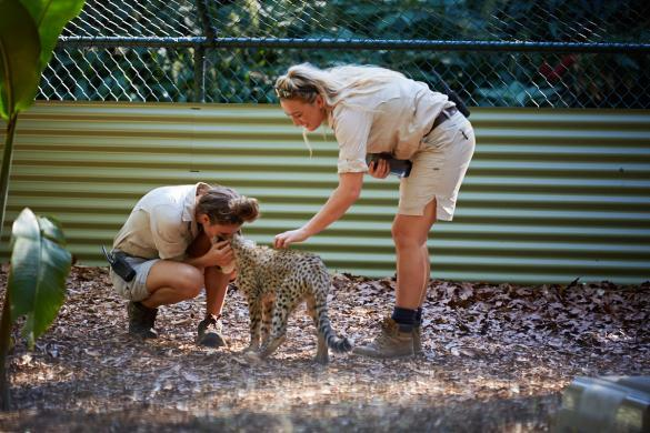 Gepard, baby, joey, Queensland, Australia Zoo, tierpfleger, love, tiny,