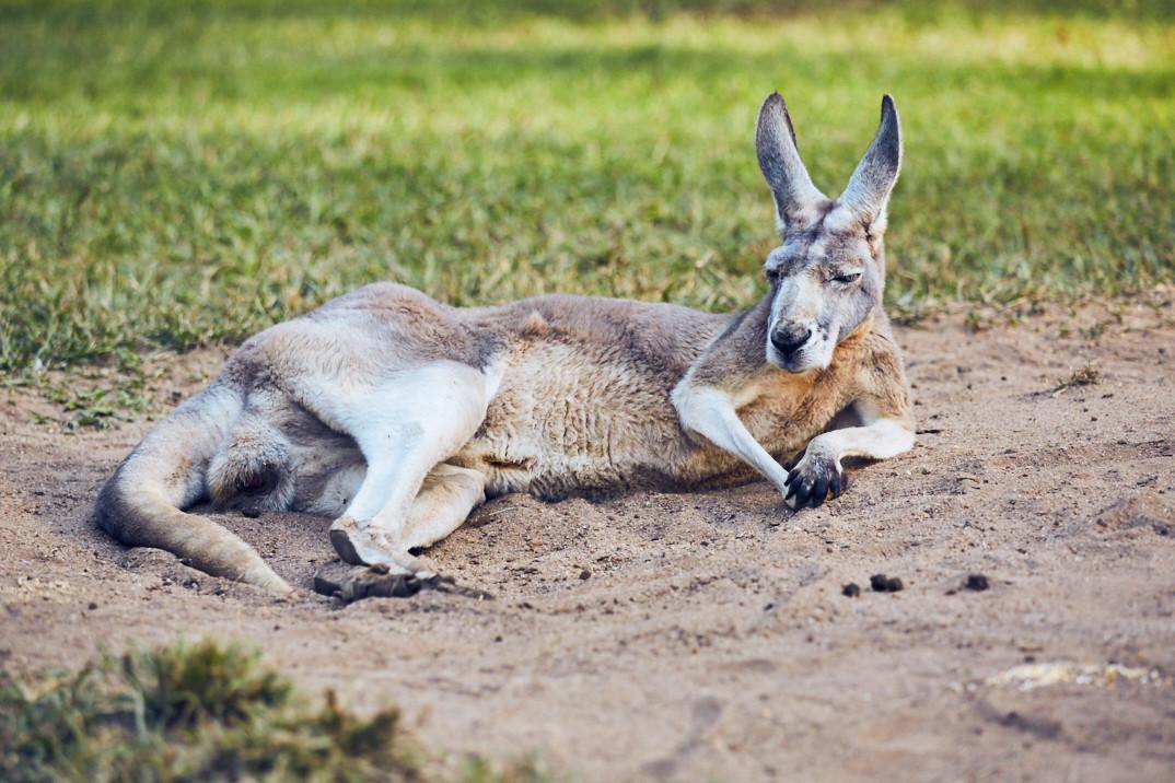 Australia Zoo & das Krokosseum