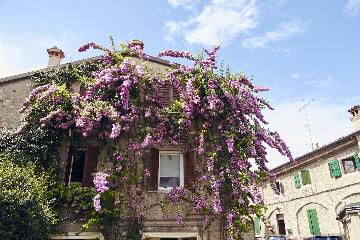 Haus, Altstadt, Sirmione, Flieder, Italien, Italia, Reiseblog, Kurzurlaub, Miles and Shores