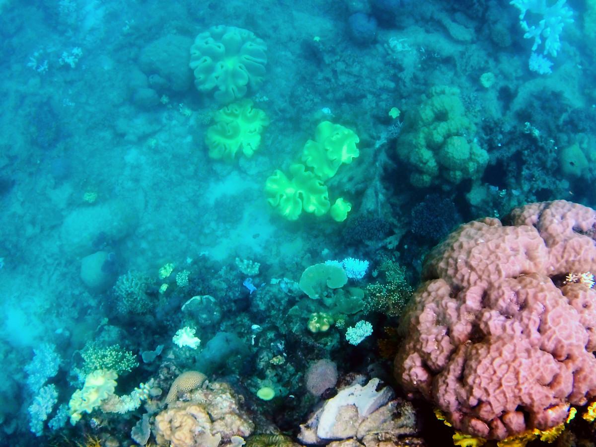 Great Barrier Reef, Tusa 6, Korallen, Koralle, Fische, Tiefe, Schnorcheln, view, Aussicht, Erfahrung, Erfahrungsbericht, Tagesausflug, Tusa6, Tusa, Ausflug, Ausflugsziel