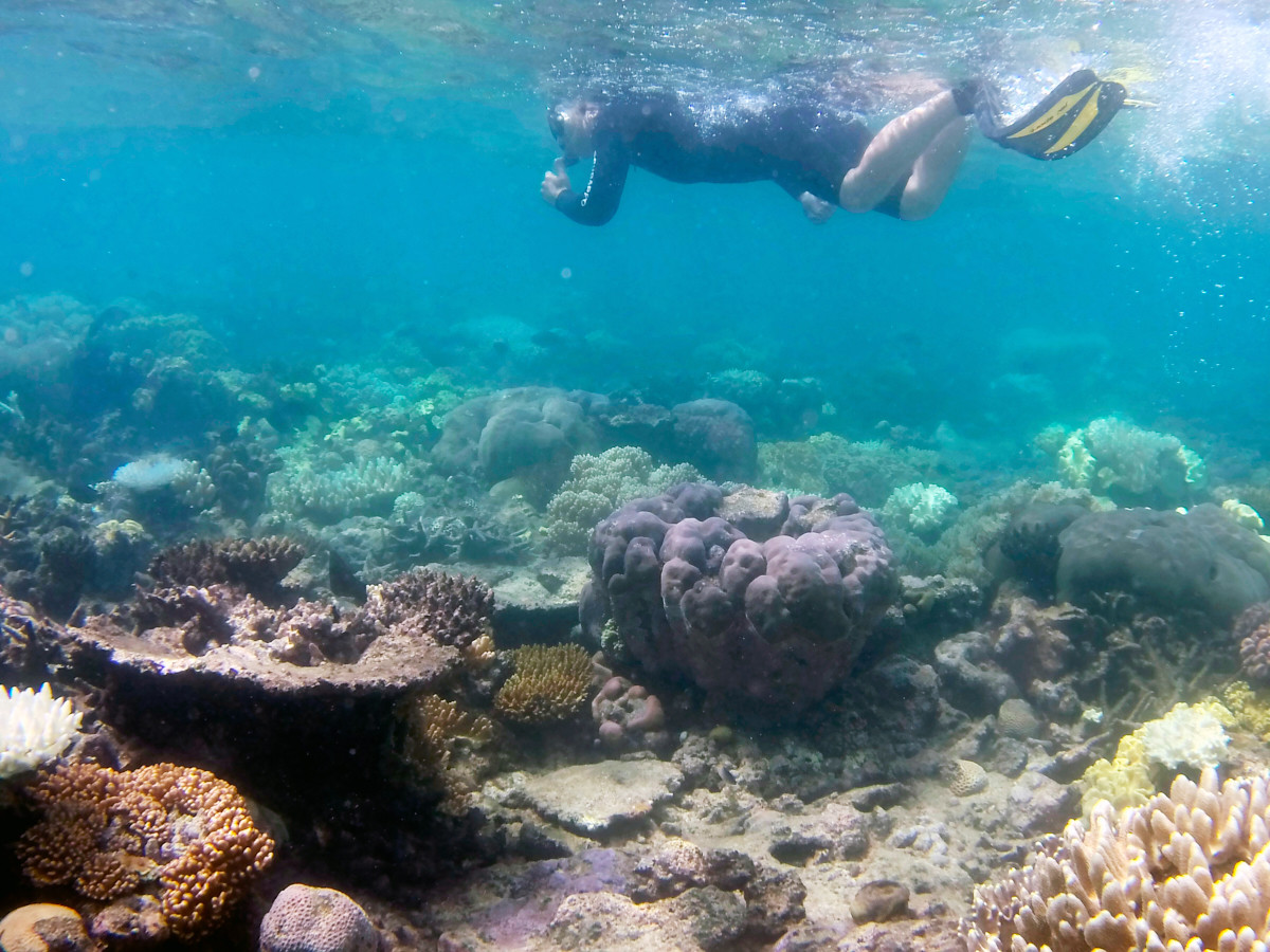 great barrier reef, tusa 6, ausflug, tagesausflug, schnorcheln, riff, rifftour, bootstour, bootsfahrt, australien, cairns, experience, erfahrung, erfahrungsbericht