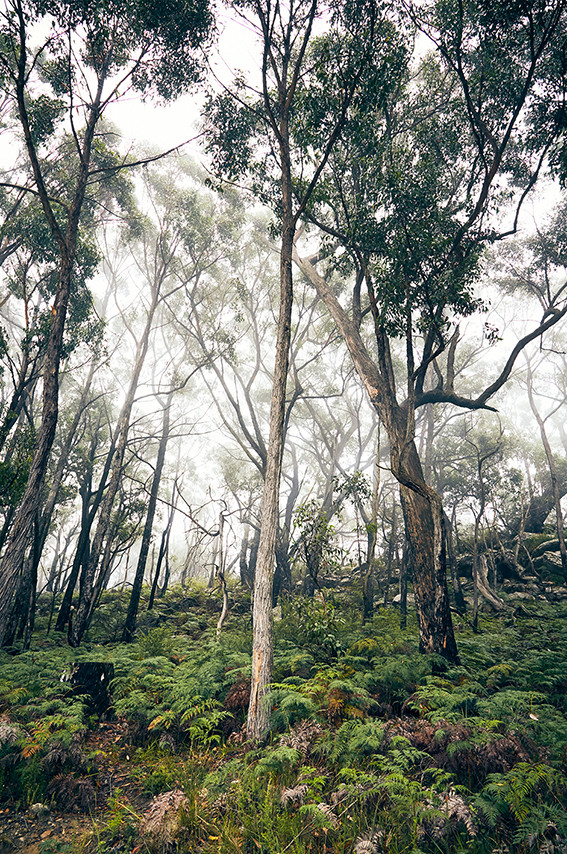 australien, roadtrip, australia, reiseblog, travelblog, miles and shores, milesandshores, travelblogger, grampians, nationalpark, national park, trees, dust, fog, moody